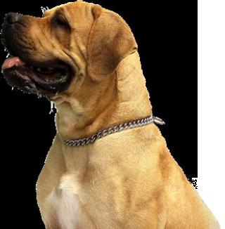 An Adorable Dog